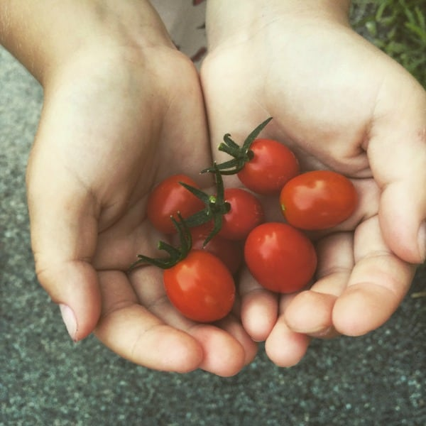 Summer Bucket List Tomatoes